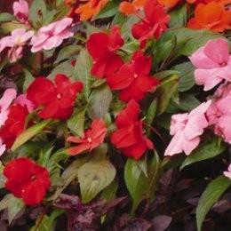 Plante fleurie d exterieur m bler med egna h nder for Plante exterieure fleurie