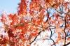 Les plantes d'automne