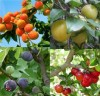 Les Gros Fruits