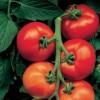 Les plants de légumes